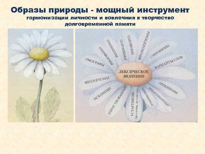 Образы природы - мощный инструмент гармонизации личности и вовлечния в творчество долговременной памяти