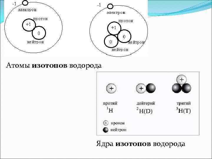 Атомы изотопов водорода Ядра изотопов водорода