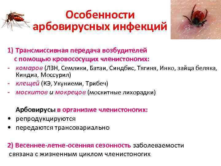 Особенности арбовирусных инфекций 1) Трансмиссивная передача возбудителей с помощью кровососущих членистоногих: - комаров (ЛЗН,