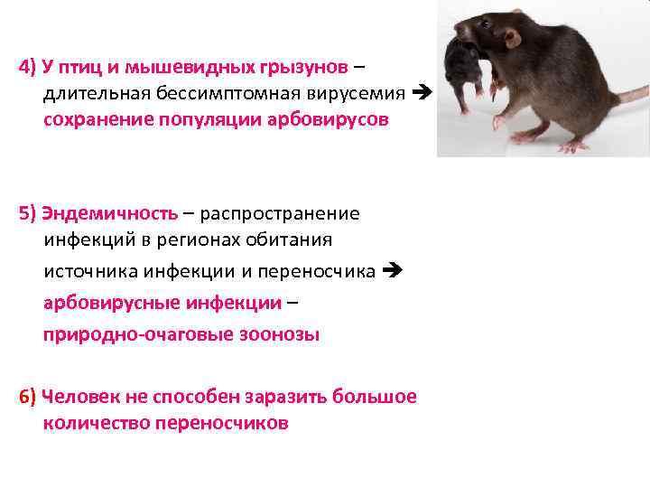 4) У птиц и мышевидных грызунов – длительная бессимптомная вирусемия сохранение популяции арбовирусов 5)