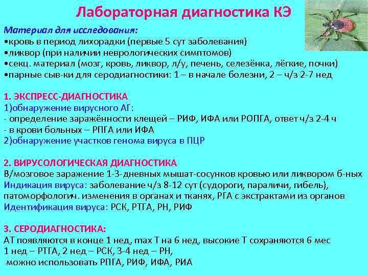 Лабораторная диагностика КЭ Материал для исследования: • кровь в период лихорадки (первые 5 сут
