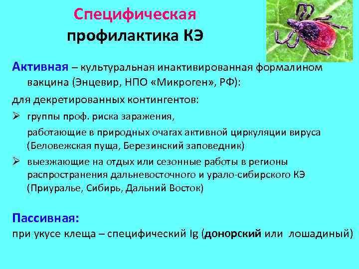 Специфическая профилактика КЭ Активная – культуральная инактивированная формалином вакцина (Энцевир, НПО «Микроген» , РФ):