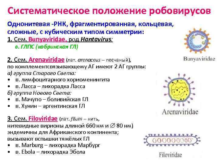 Систематическое положение робовирусов Однонитевая -РНК, фрагментированная, кольцевая, сложные, с кубическим типом симметрии: 1. Сем.