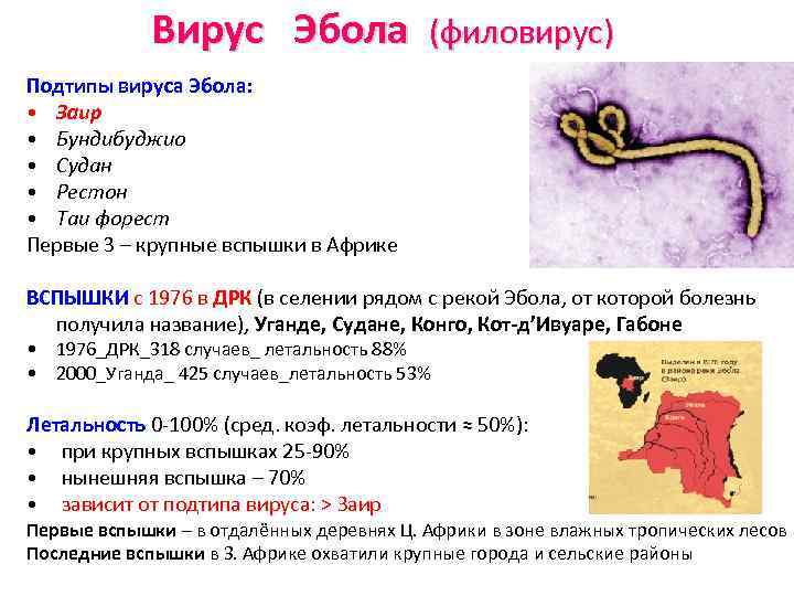 Вирус Эбола (филовирус) Подтипы вируса Эбола: • Заир • Бундибуджио • Судан • Рестон