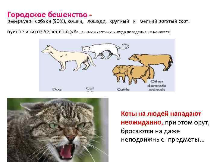 Городское бешенство - резервуар: собаки (90%), кошки, лошади, крупный и мелкий рогатый скот! буйное