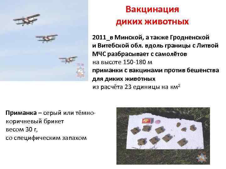 Вакцинация диких животных 2011_в Минской, а также Гродненской и Витебской обл. вдоль границы с