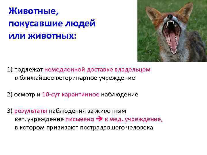 Животные, покусавшие людей или животных: 1) подлежат немедленной доставке владельцем в ближайшее ветеринарное учреждение