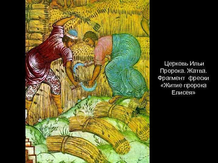 Церковь Ильи Пророка. Жатва. Фрагмент фрески «Житие пророка Елисея»
