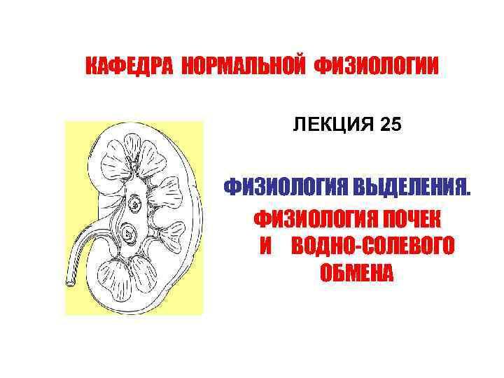 КАФЕДРА НОРМАЛЬНОЙ ФИЗИОЛОГИИ ЛЕКЦИЯ 25 ФИЗИОЛОГИЯ ВЫДЕЛЕНИЯ. ФИЗИОЛОГИЯ ПОЧЕК И ВОДНО-СОЛЕВОГО ОБМЕНА