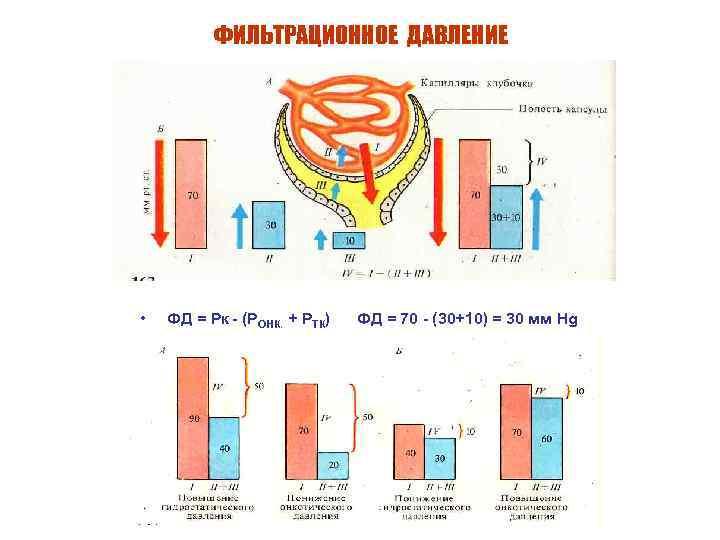 ФИЛЬТРАЦИОННОЕ ДАВЛЕНИЕ • ФД = Рк - (РОНК. + РТК) ФД = 70 -