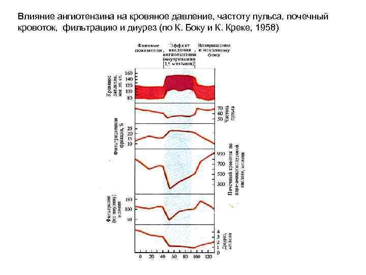 Влияние ангиотензина на кровяное давление, частоту пульса, почечный кровоток, фильтрацию и диурез (по К.
