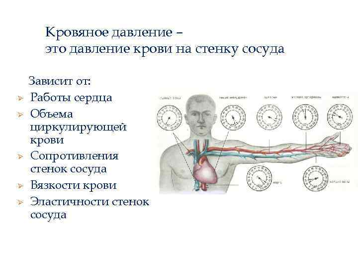 Кровяное давление – это давление крови на стенку сосуда Ø Ø Ø Зависит от: