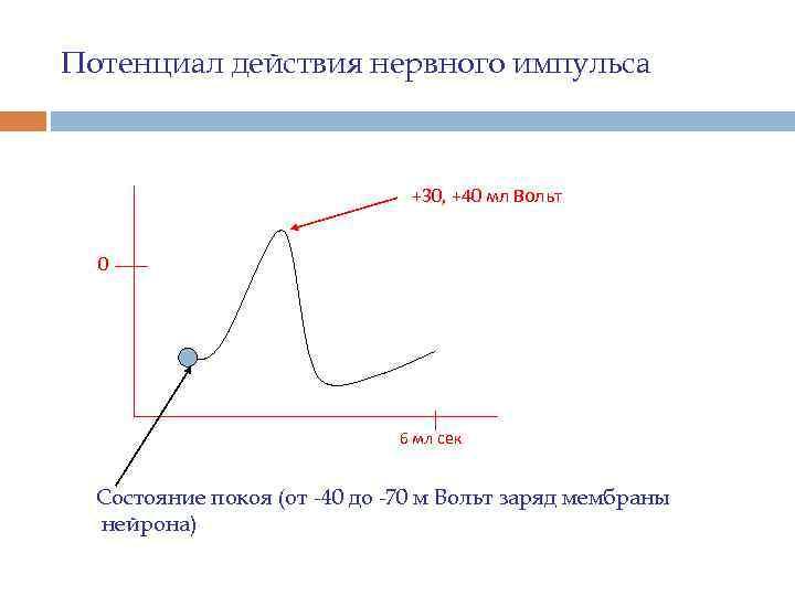 Потенциал действия нервного импульса +30, +40 мл Вольт 0 6 мл сек Состояние покоя