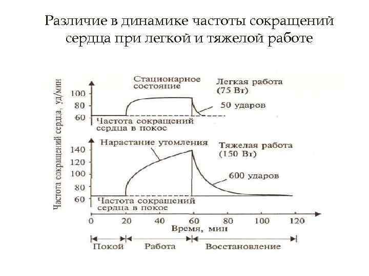Различие в динамике частоты сокращений сердца при легкой и тяжелой работе