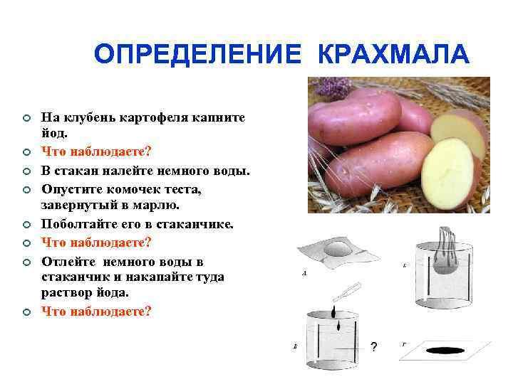 ОПРЕДЕЛЕНИЕ КРАХМАЛА На клубень картофеля капните йод. Что наблюдаете? В стакан налейте немного воды.