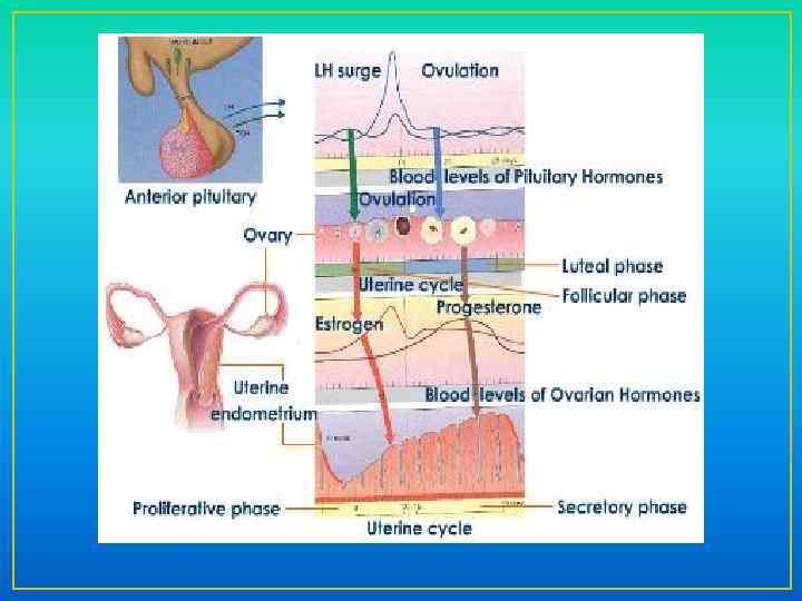 griesinger 2013 progesterone