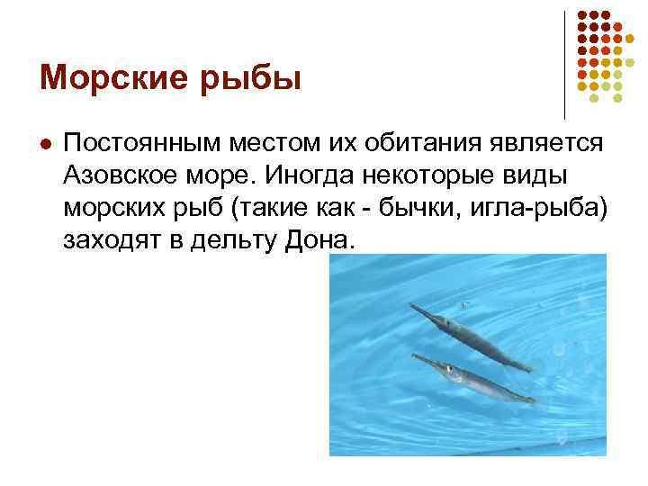 Морские рыбы l Постоянным местом их обитания является Азовское море. Иногда некоторые виды морских