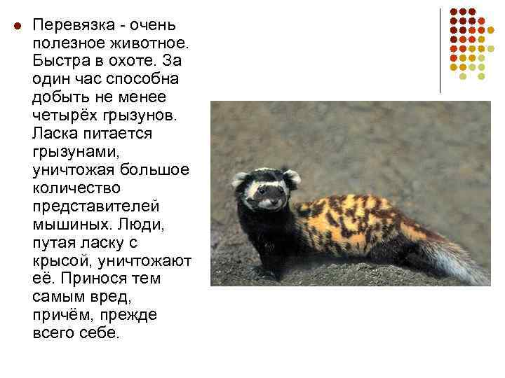 l Перевязка - очень полезное животное. Быстра в охоте. За один час способна добыть