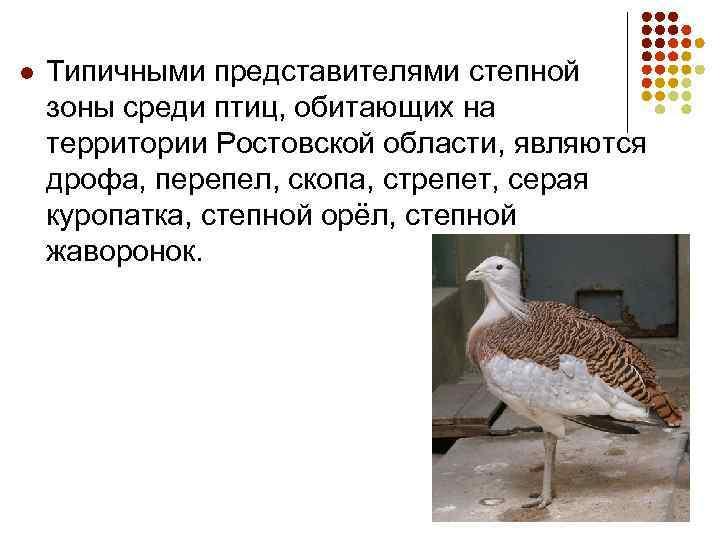 l Типичными представителями степной зоны среди птиц, обитающих на территории Ростовской области, являются дрофа,