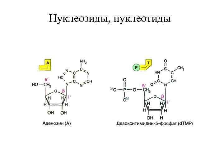 Нуклеозиды, нуклеотиды