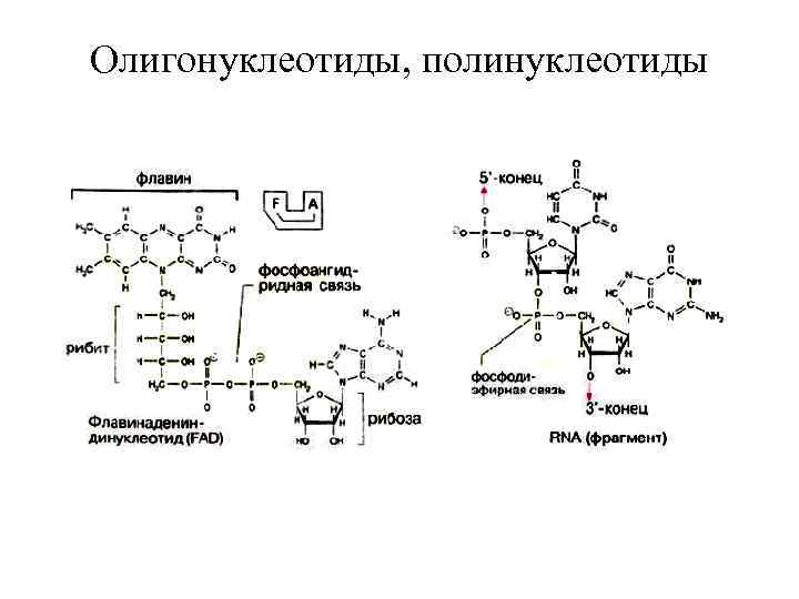 Олигонуклеотиды, полинуклеотиды