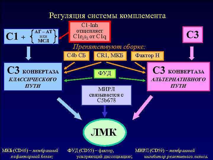 Почему комплементсхема Регуляция системы комплемента Общая не уничтожает клетки C 1 -Inh организма-хозяина? C