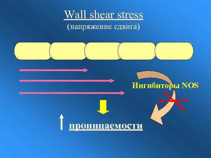 Wall shear stress (напряжение сдвига) Ингибиторы NOS проницаемости