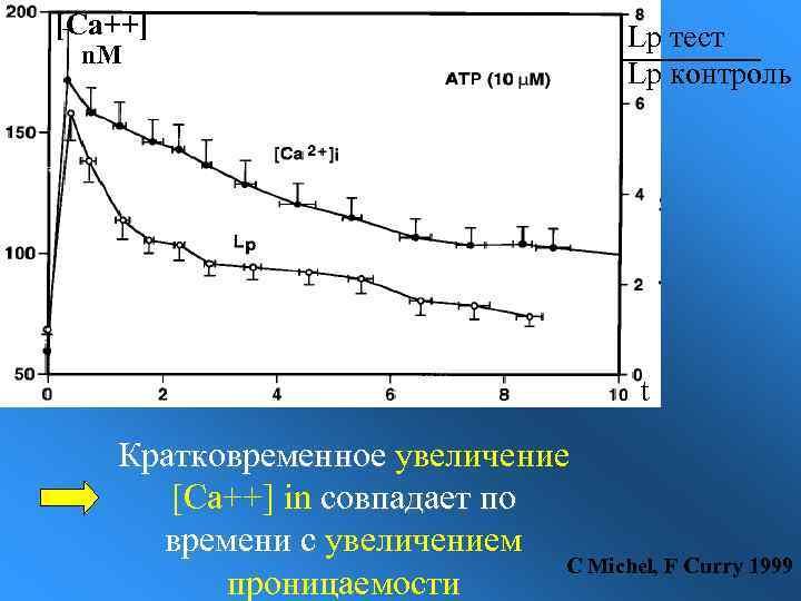 [Ca++] n. M Lp тест Lp контроль t Кратковременное увеличение [Ca++] in совпадает по