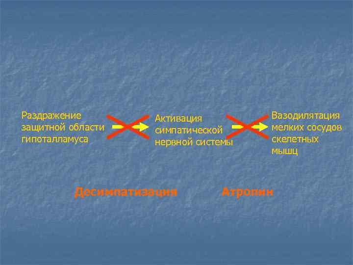 Раздражение защитной области гипоталламуса Активация симпатической нервной системы Десимпатизация Вазодилятация мелких сосудов скелетных мышц