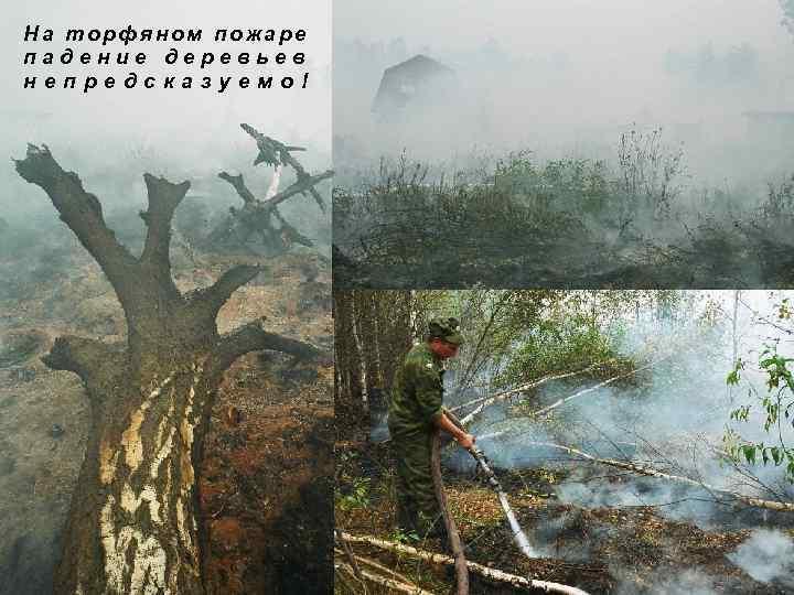 На торфяном пожаре падение деревьев непредсказуемо!