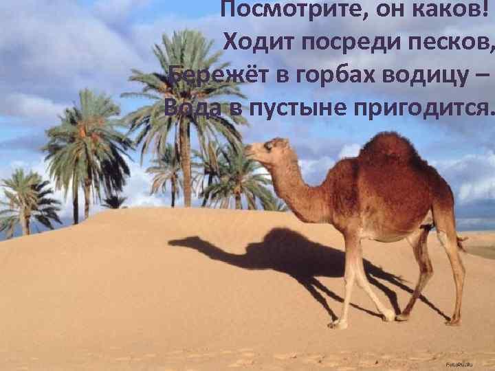 Посмотрите, он каков! Ходит посреди песков, Бережёт в горбах водицу – Вода в пустыне
