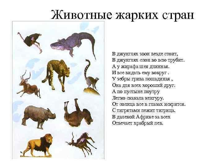 Животные жарких стран В джунглях звон везде стоит, В джунглях слон во всю трубит.