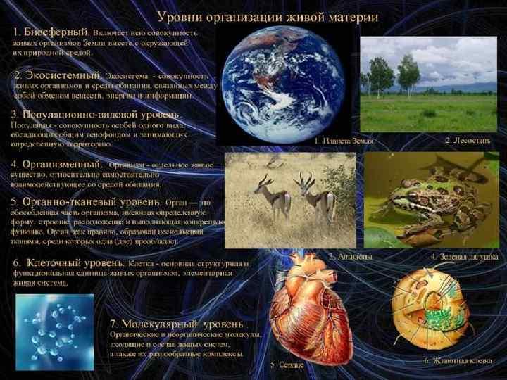 Уровни организации живой материи схемы