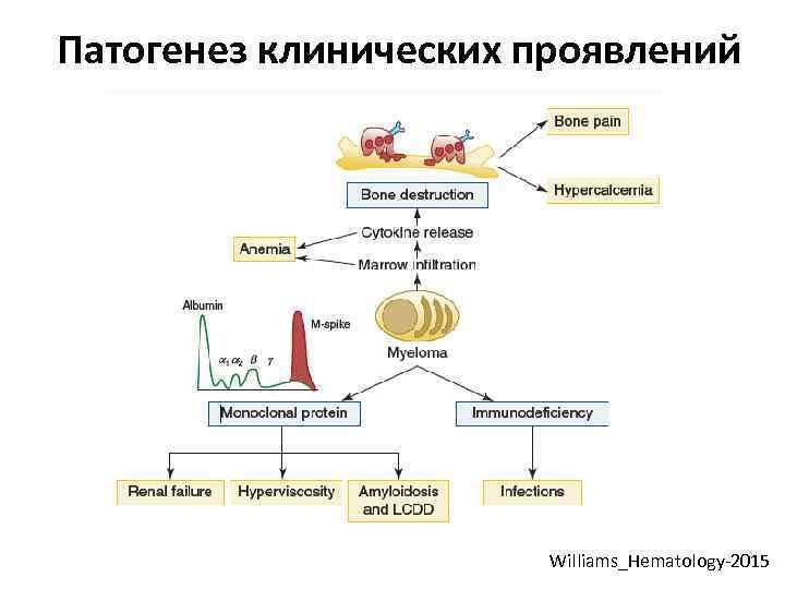 Патогенез клинических проявлений Williams_Hematology-2015