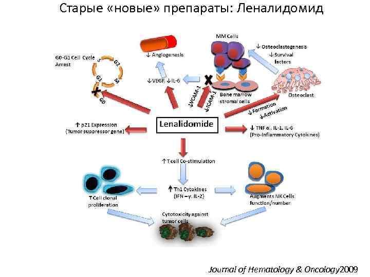 Старые «новые» препараты: Леналидомид Journal of Hematology & Oncology 2009