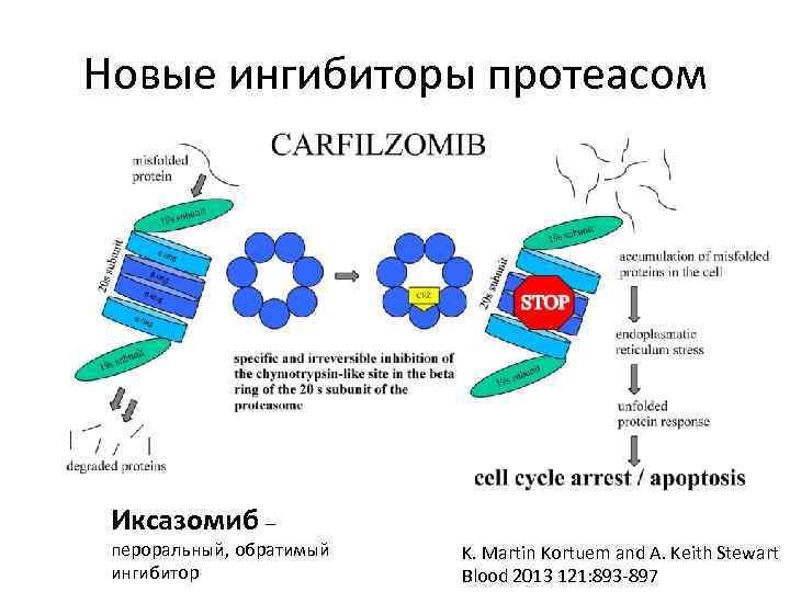 Новые ингибиторы протеасом Иксазомиб – пероральный, обратимый ингибитор K. Martin Kortuem and A. Keith