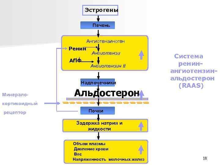 Эстрогены Печень Ангиотензиноген Ренин н. I АПФ Ангиотензин II Надпочечники Минерало- Альдостерон Система ренин