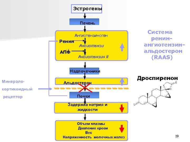 Эстрогены Печень Ангиотензиноген Ренин н. I АПФ Ангиотензин II Система ренин ангиотензин альдостерон (RAAS)