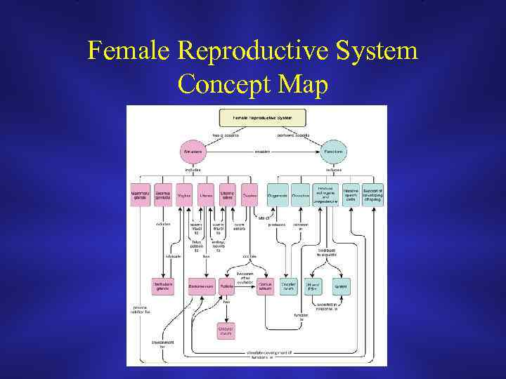 Reproductive System Concept Map.Introduction To Obstetrics Gynecology Overview Objectives