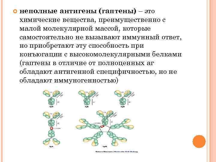 неполные антигены (гаптены) – это химические вещества, преимущественно с малой молекулярной массой, которые