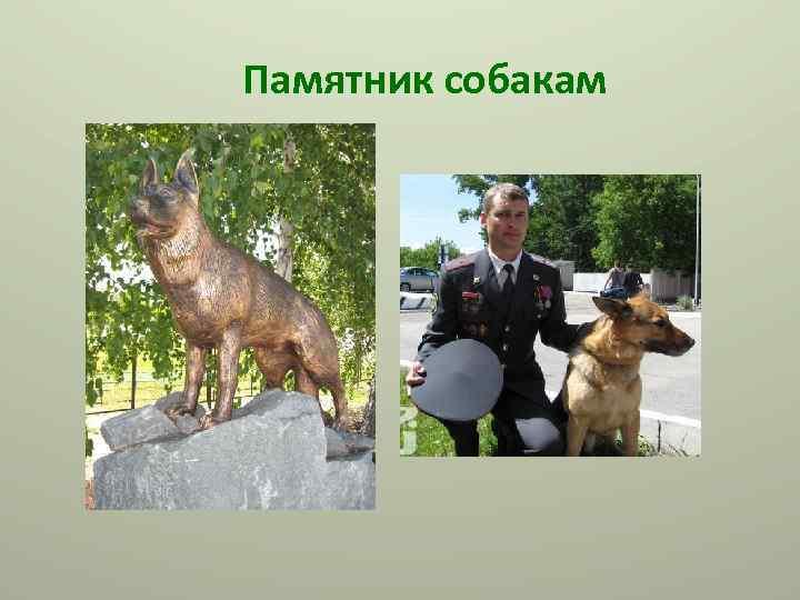 Памятник собакам