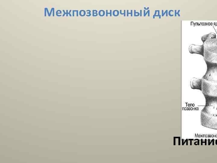Межпозвоночный диск Питание