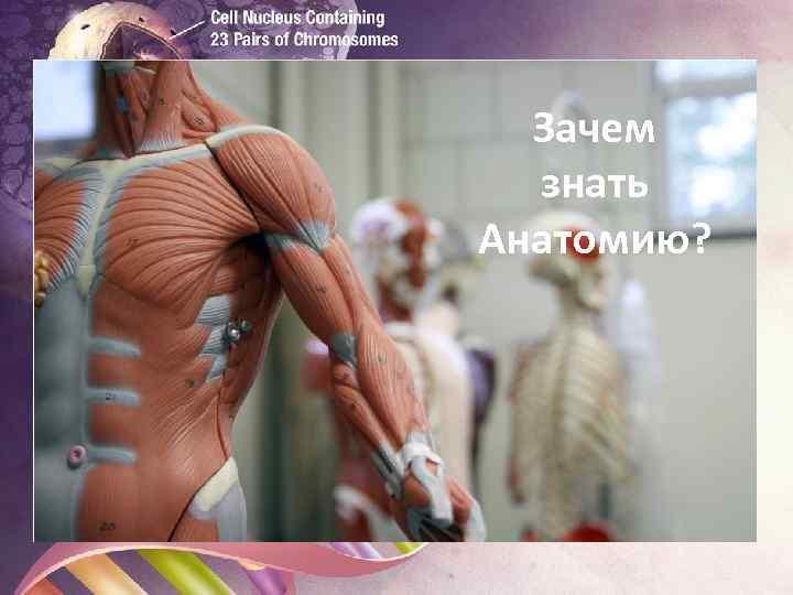 Зачем знать Анатомию? Биология