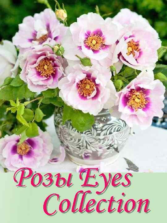 Розы Eyes Collection