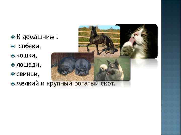 К домашним : собаки, кошки, лошади, свиньи, мелкий и крупный рогатый скот.