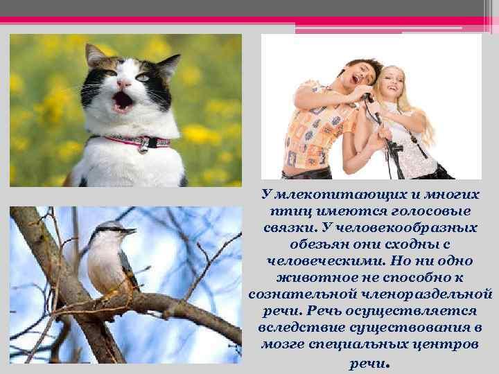 У млекопитающих и многих птиц имеются голосовые связки. У человекообразных обезьян они сходны с