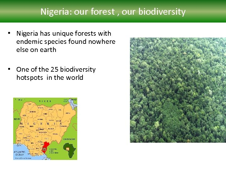 Nigeria: our forest , our biodiversity • Nigeria has unique forests with endemic species