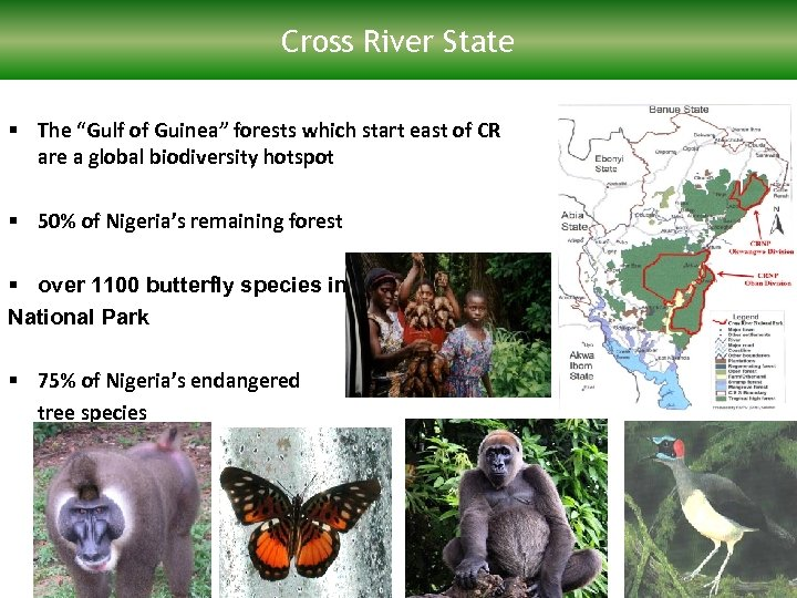 "Cross River State § The ""Gulf of Guinea"" forests which start east of CR"