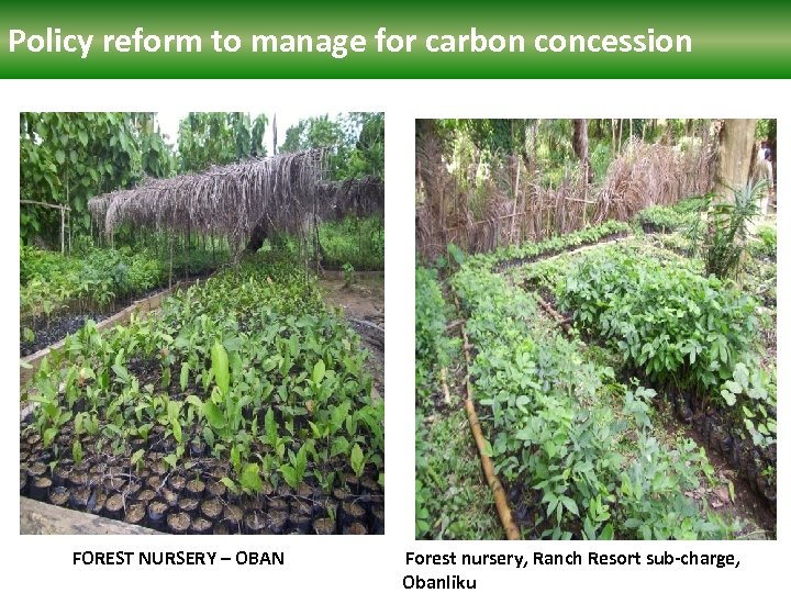 Policy reform manage for carbon concession Polcy reform to to manage for carbon concession