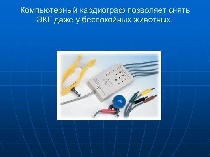 Компьютерный кардиограф позволяет снять ЭКГ даже у беспокойных животных.